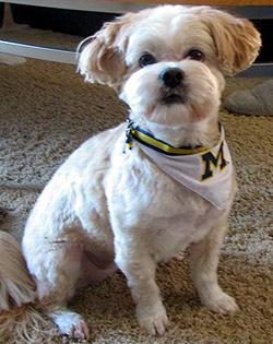 Morrisons sells dog bibs?